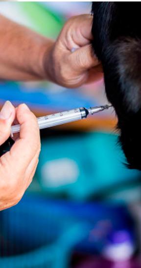 anestesia-animales-veterinario-jaen